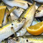 receta omega3 jurel cremoso